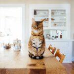 how to pet cat