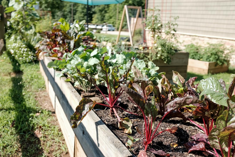 how to start vegetable garden