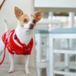 tips for successful dog training